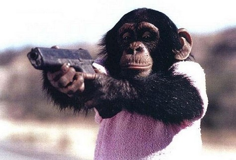 Monkey w gun