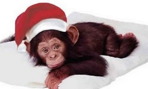 Christmas Monkeys