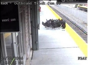 Turkeys_on_train